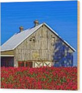 Barn In Red Clover Wood Print by Denise Darby