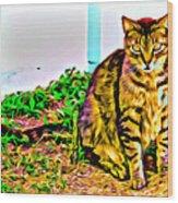 Barn Kitty Wood Print