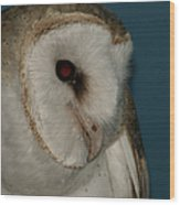 Barn Owl 2 Wood Print