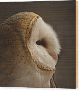 Barn Owl 3 Wood Print