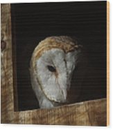 Barn Owl 5 Wood Print