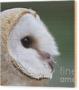 Barn Owl Closeup Portrait Wood Print