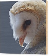 Barn Owl Dry Brushed Wood Print