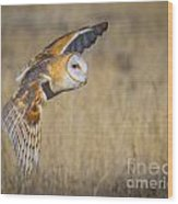 Barn Owl In Flight Wood Print