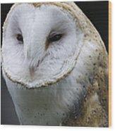 Barn Owl No.1 Wood Print