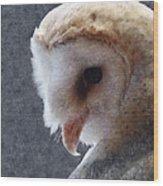 Barn Owl Painterly Wood Print