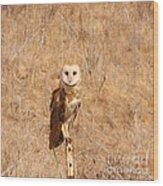 Barn Owl Perching Wood Print