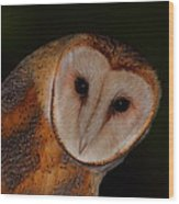 Barn Owl Portrait II Wood Print