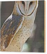Barn Owl Raptor  Wood Print