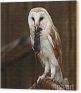 Barn Owl With Catch Of The Day Wood Print
