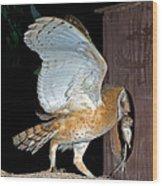 Barn Owl With Rat Wood Print