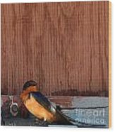 Barn Swallow Wood Print