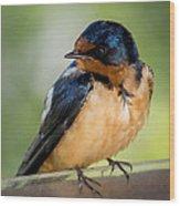 Barn Swallow Wood Print by Ernie Echols