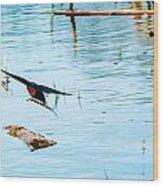 Barn Swallow In Flight Wood Print