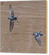 Barn Swallow In Flight Wood Print by Mike Dickie