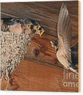 Barn Swallow Nest Wood Print