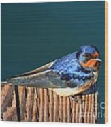Barn Swallow Perching Wood Print