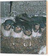 Barn Swallows Wood Print by Hans Reinhard
