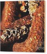 Barnacles And Rust  Wood Print