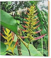 Barnilies Flower Wood Print