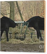 Barnyard Beauties Wood Print
