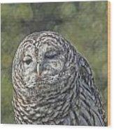 Barred Hoot Owl Photo Art Wood Print