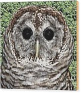 Barred Owl 1 Wood Print