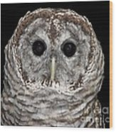 Barred Owl 3 Wood Print