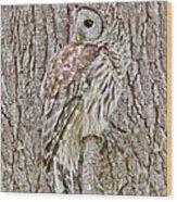 Barred Owl Camouflage Wood Print