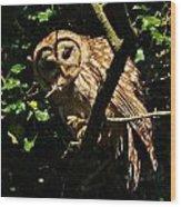 Barred Owl  Hello Wood Print
