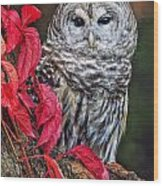 Barred Owl II Wood Print