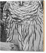 Barred Owl In Black And White Wood Print