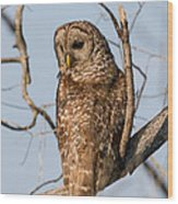 Barred Owl Okefenokee Swamp Georgia Wood Print