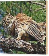 Barred Owl On Limb Wood Print