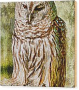 Barred Owl On Moss Wood Print