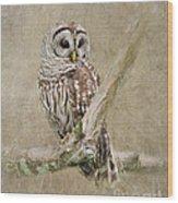 Barred Owl Portrait Wood Print