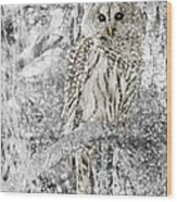 Barred Owl Snowy Day In The Forest Wood Print