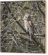 Barred Owl Square Wood Print