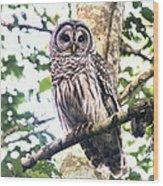 Barred Owl Staring Wood Print