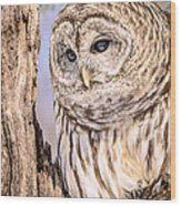 Barred Owl Watch Wood Print