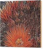 Barrel Cactus Wood Print