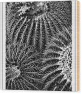 Barrel Cactus Poster Wood Print
