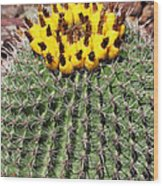 Barrel Cactus With Yellow Fruit Wood Print
