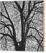 Barren 2 Bw Wood Print