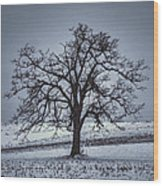 Barren Winter Scene With Tree Wood Print