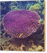 Barrier Reef Coral II Wood Print