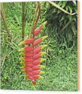 Barriles Heliconia Wood Print