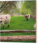 Barrington Farm Bovine Wood Print