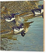 Barrow's Goldeneyes Going For The Gold Wood Print