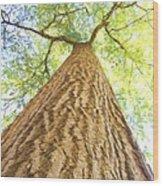 Bartrams Tree Wood Print